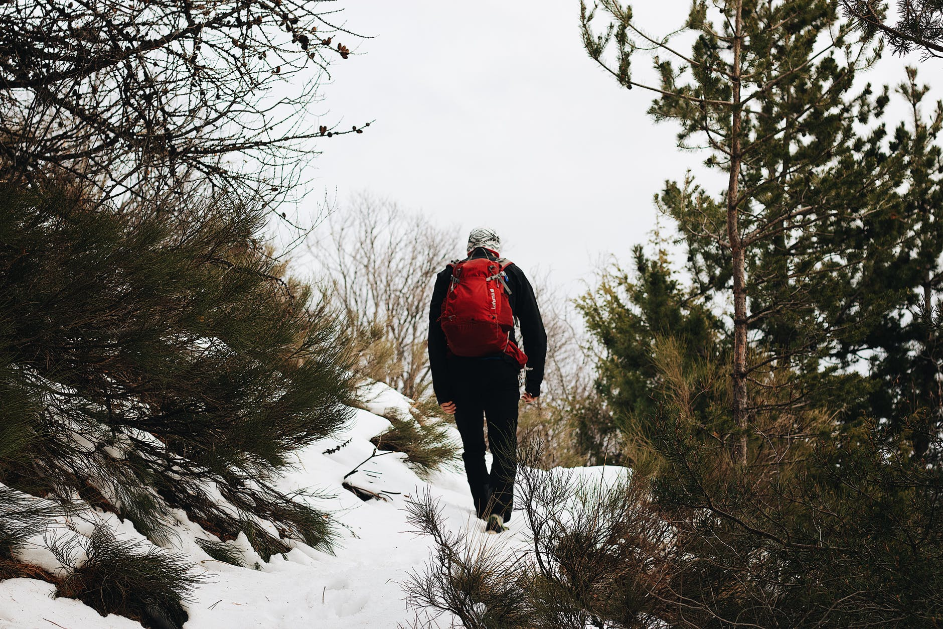 person walking on snowy ground beside trees