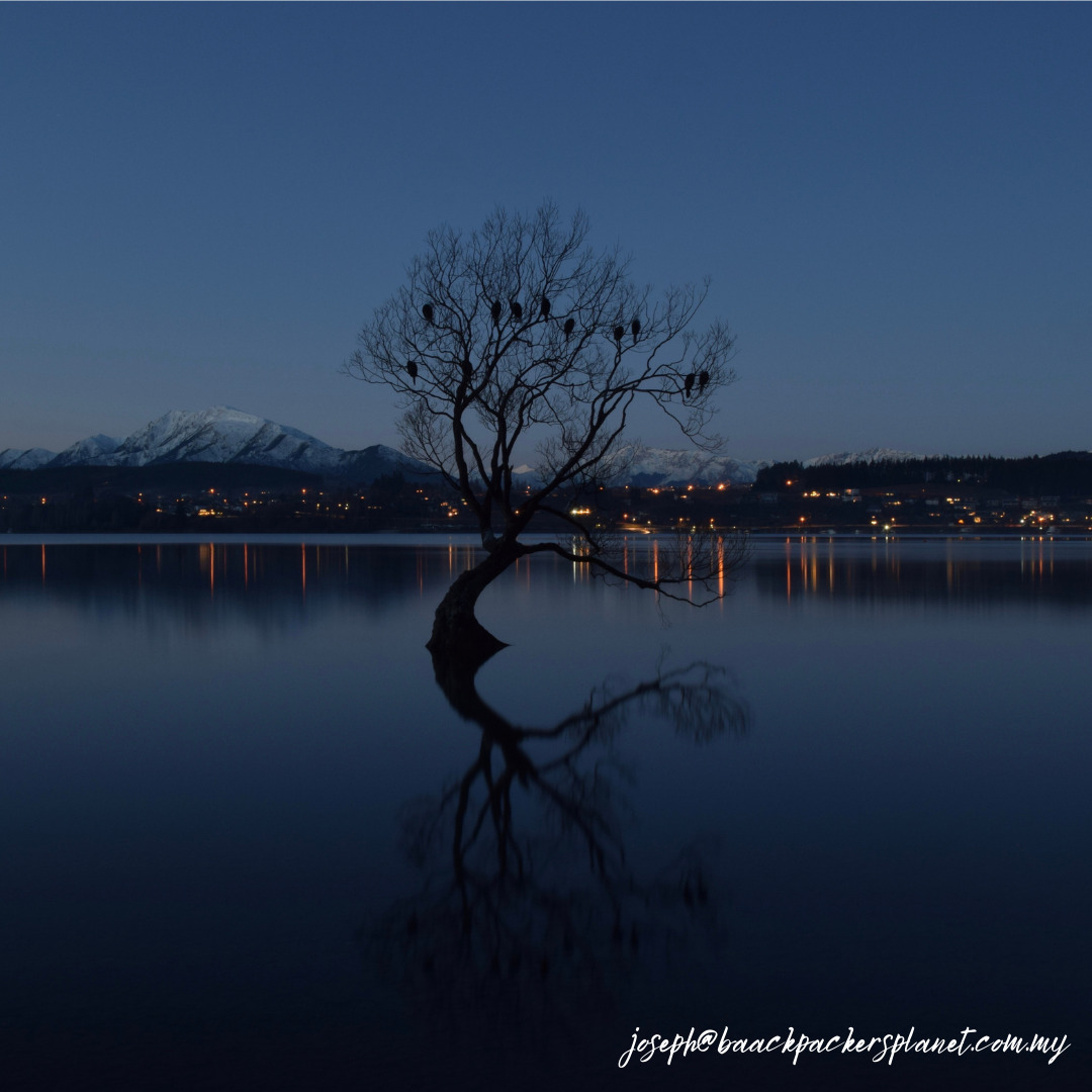 Famous lone tree on the lake Wanaka at blue hours.