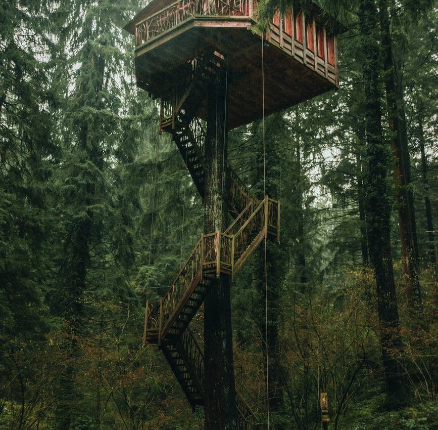 wooden house on tree trunk located in lush forest